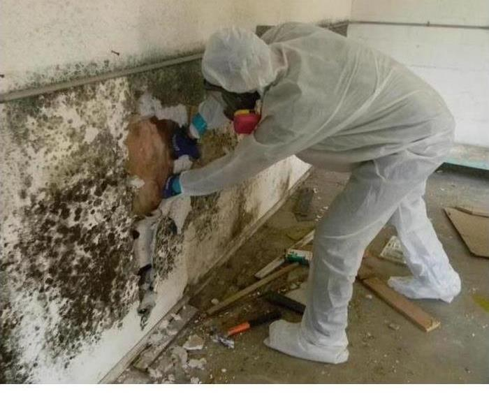 A Servpro Technician in their PPE removing mold growth from behind a wall in a highly affected home.